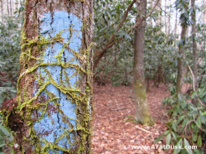 Green moss encroaching on a blue blaze.