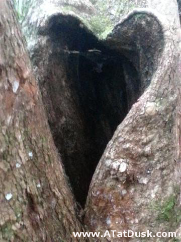 A heart-shaped tree knot.