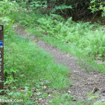 Trail marker for the blue blazed Kimsey Creek Trail.
