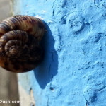 A snail slithering along the blue blazed Long Branch Trail.