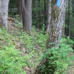 A source of information, this double blue blaze indicates a right turn in the trail.