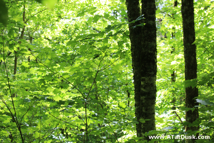 Deep in the Nantahala National Forest under a canopy of leaves, filtering the dappled sunshine.